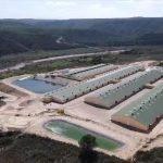 Nueva granja de madres en Fayón